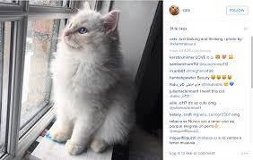 Cat Instagram 5 Pawesome Pet Instagram Accounts You Must Follow U2013 Project