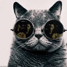 Morpheus Cat Meme - morpheus cat matrix morpheus know your meme