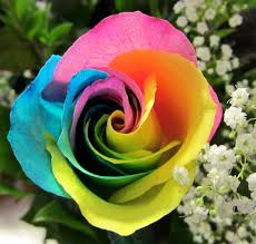 San Diego Flower Delivery Rainbow Rose Cube Products Local Florist In San Diego Ca