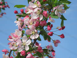 trees with white flowers flowering trees in virginia a guide for