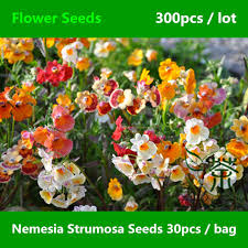 widely cultivated nemesia strumosa seeds 300pcs ornamental plant