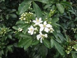 shrubs the trees flowers of whangarei