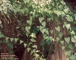 Support For Climbing Plants - garden design garden design with climbing plant support climbing