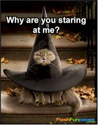 Halloween Cat Meme - true book addict true to books cat thursday halloween week two