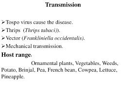 plant viruses diseases and symptoms