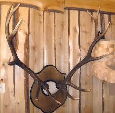 horns for sale mac s taxidermy mooseheads for sale taxidermy for sale