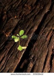 fresh green plant seed stock photo 335839412