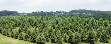 The Barn Wooster Ohio Pine Tree Barn