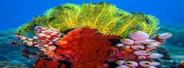 con dao dive centre rainbow divers vietnam