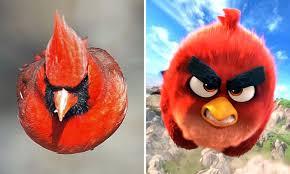 red northern cardinal angry bird popular