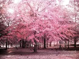 surreal pink tree landscape south carolina pink nature landscape