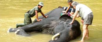 sumatra crossing indonesia