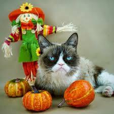 official grumpy cat