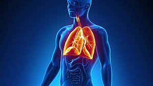Male Anatomy Video Human Lung Hd Video U0026 4k B Roll Istock