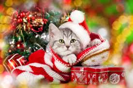 cat christmas cat safety tips christmas safety tips for cats