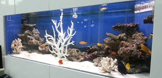 custom aquariums cabinetry filtration systems and steel stands