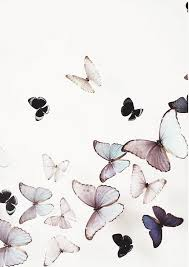 pin by bleue on butterfly butterfly kisses
