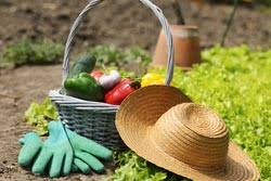 4 home vegetable garden ideas u0026 types on a budget