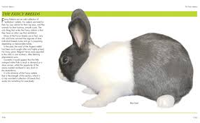 mini encyclopedia of rabbit breeds and care a color directory of