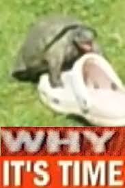 Tortoise Meme - tortoise sex face know your meme