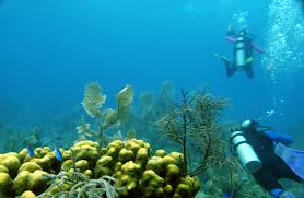 borneo divers mabul resort borneo packages