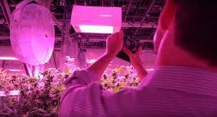 led grow lights accelerated harvest with heliospectra u0027s spectral