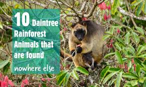 Dominant Plants Of The Tropical Rainforest - 10 daintree rainforest animals that are found nowhere else