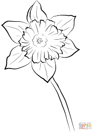 yellow daffodil coloring page free printable coloring pages