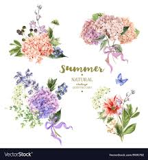 vintage bouquet set of vintage bouquet blooming hydrangea vector image