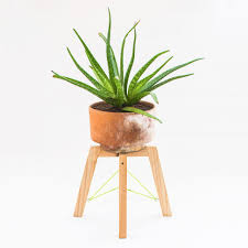 plant stand short plants indoor imposing pictures design for
