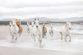 papier peint chevaux pour chambre blanc chevaux papier peint photo mural pour chambre à coucher