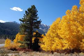 fall colors film mono county