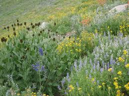 utah native plants alpine gardens extension