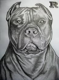 pitbull head sketches famous pencil drawings of pit bulls email