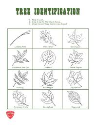 tree identification u2013 extras t r e e online