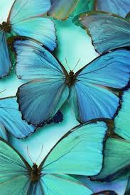 Blue And Green Butterfly - the 25 best blue butterfly ideas on beautiful
