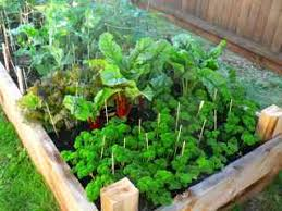 Grow Vegetable Garden by Organic Vegetable Gardening The Healthier Way To Grow Your