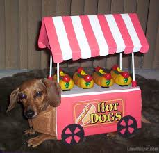 Halloween Costumes Miniature Dachshunds Dog Vendor Costume Cute Animals Halloween Crafts Diy Costumes