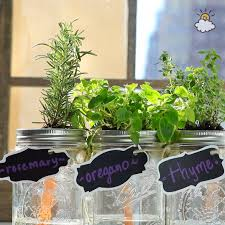 grow herbs at home with this self watering mason jar garden