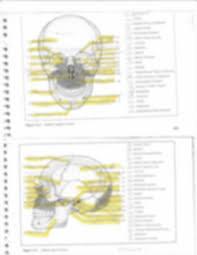 Cranial Nerves Worksheet Anatomy Chapter 10 Worksheet Exercise 14 The Skull Occipital