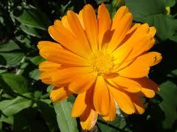 port orange florist index of wallpapers flowers 12 xls