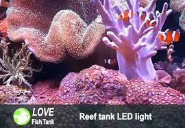led reef lighting reviews marine aquarium led lighting reviews sportymom me