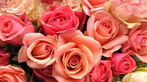 roses valentines day different s day flowers and their meanings wotv4women