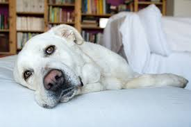 pet bereavement bereavement leave has to the dogs hr daily advisor