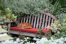 cats animals napping garden bench cat wallpapers wild cats hd 16