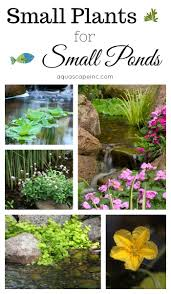 small plants for small ponds aquascape inc