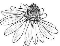 Flower Drawings Black And White - 17 1k likes 63 comments grace foundbygrace on instagram