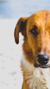 dog bites category archives u2014 atlanta accident attorney blog