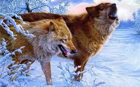 imagenes sorprendentes de lobos sorprendentes lobos fondo de pantalla lobos pinterest fondos