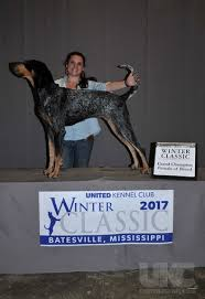 bluetick coonhound mississippi multi ch fly